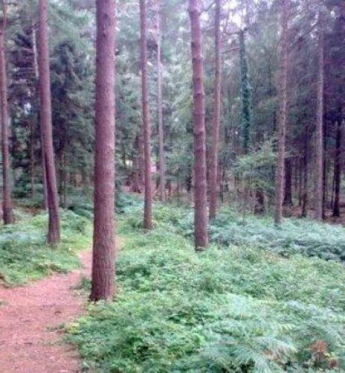 haldon-forest-park